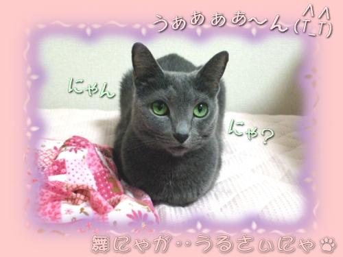 sonekuji_miru01.jpg